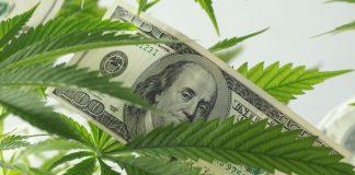 cannabis shares