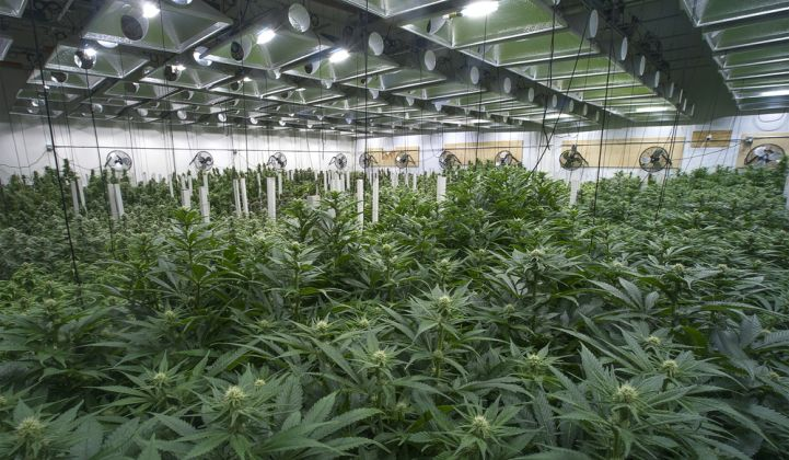 Canadian Cannabis Grower TerrAscend Plans To Enter U.S ...