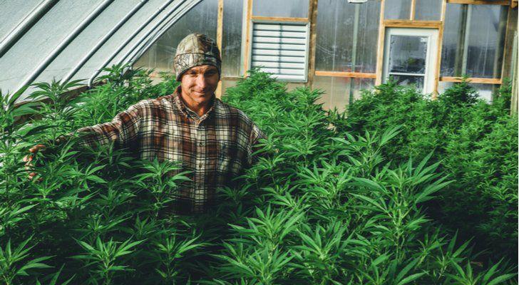 Aurora Cannabis Quartalszahlen