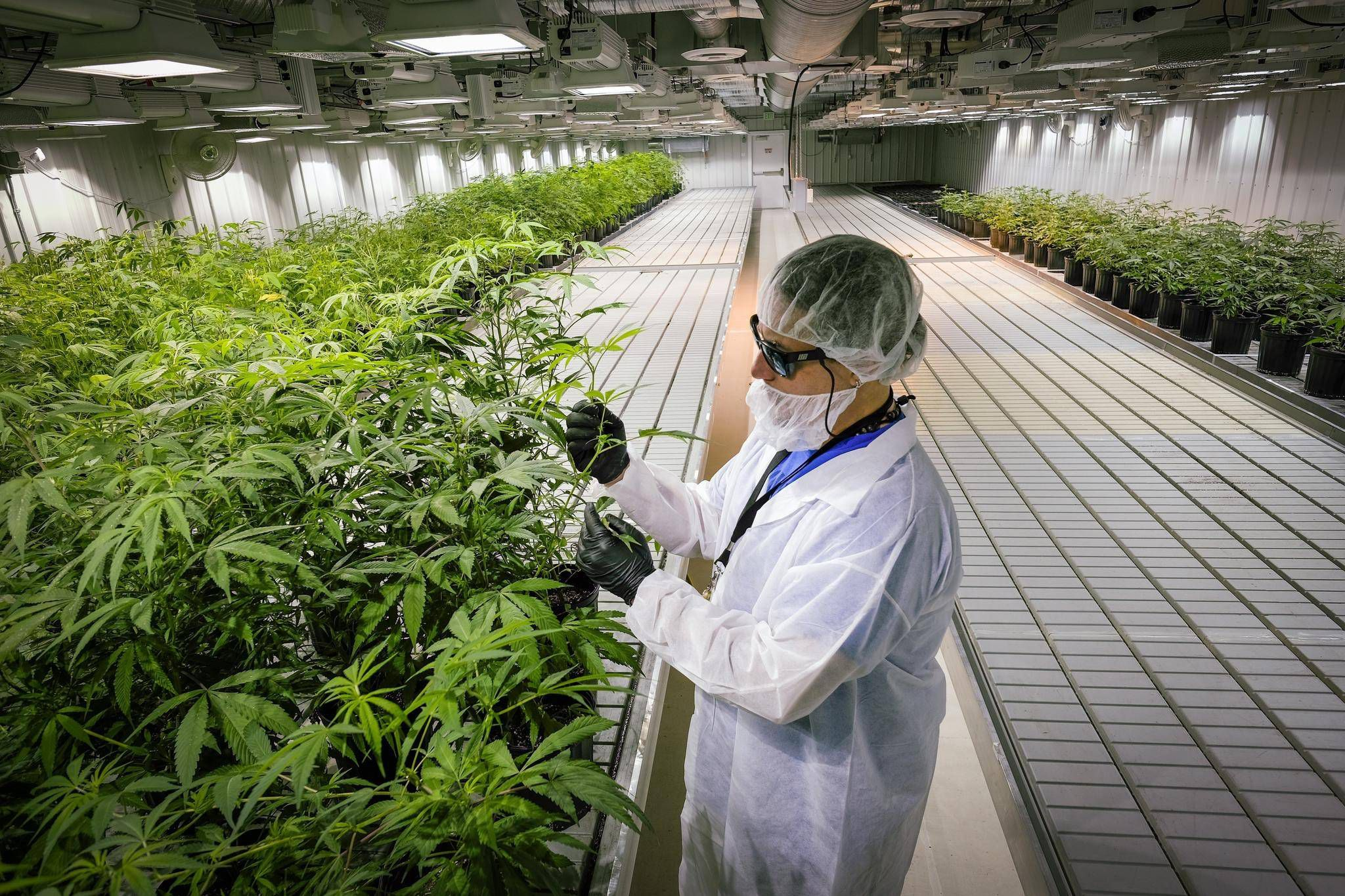 Aurora Cannabis Inc. (TSX:ACB) Up +10.20% Tuesday