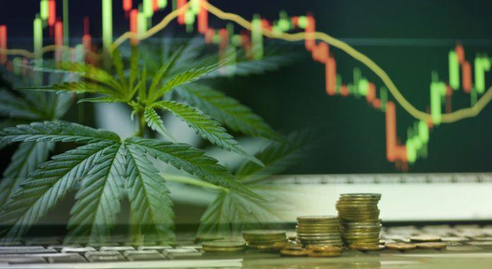 aurora_cannabis