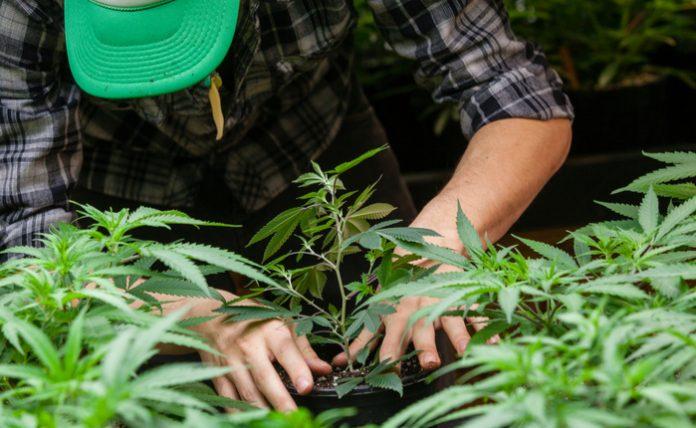 Canopy Growth