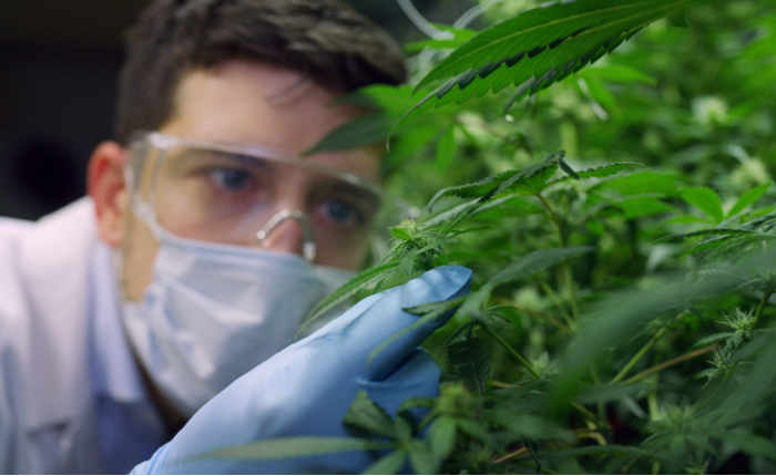 $-0.29 EPS Expected for Canopy Growth Corporation (CGC)
